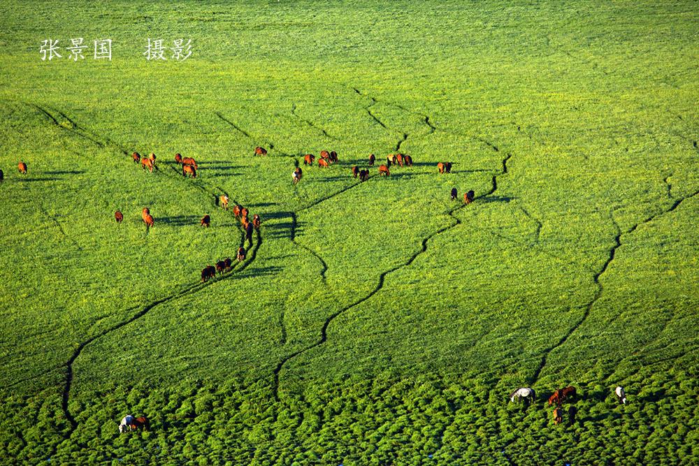第二届夏季万马奔腾摄影团招募图片